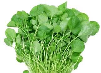 WATERCRESS SEEDS - Nasturtium - 500 seeds
