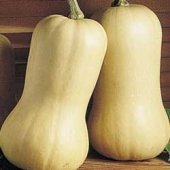 Waltham Butternut Squash - 10 seeds - vegetable garden