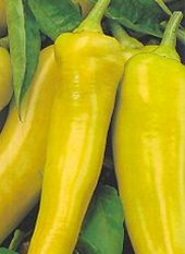 Sweet Pepper - SWEET BANANA - 25 seeds