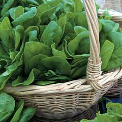 Spinach - Medania - open pollinated - 300 seeds