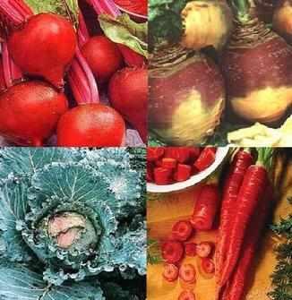 4 packs of vegetable seeds Beet, Swede, Cabbage, Carrot