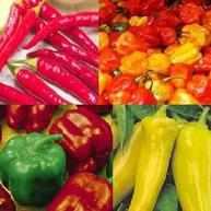4 packs Pepper seeds - Scotch bonnet red, cayenne and sweet pepper