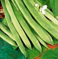 Runner Bean White Emergo Seeds
