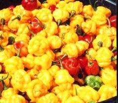 Chilli pepper - Scotch Bonnet (Yellow) 12 Seeds