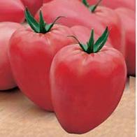 Tomato - OxHeart - cuor di bue - 40 seeds