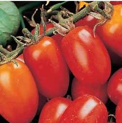 Tomato Principe Borghese 40 seeds