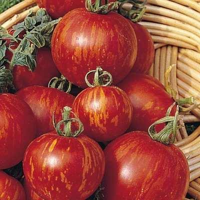 Tomato - Tigerella - 40 seeds