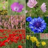 10 Packs Wild flower seeds inc Poppy, Cornflower, Foxglove etc