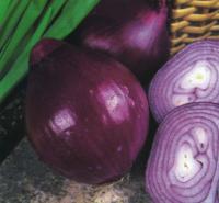 Onion Red Brunswick Seeds
