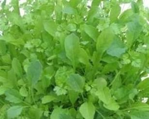 French - Classic Mesclun Mix seeds
