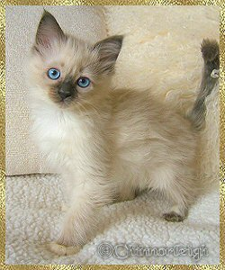 Litter 10 p (blue mitted girl)