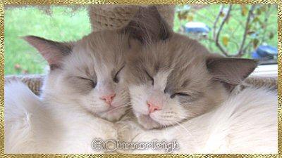 Sibling Love......