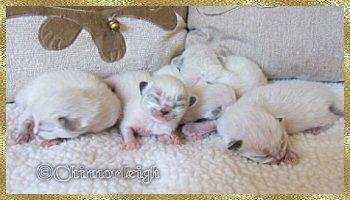 Belles babies 1