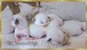 Belles babies 2