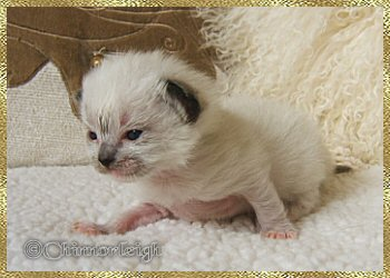 Belles seal mitted girl