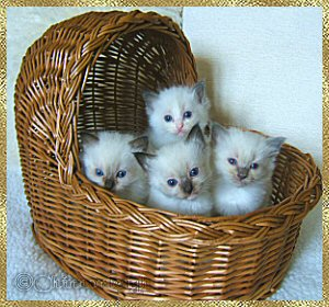 Belles babies in a basket
