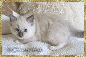Queenies blue mitted boy 1 at 7 weeks