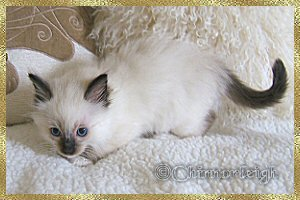 Queenies seal mitted girl at 7 weeks