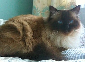 Lola (March 2011)