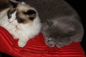 Frankie & Alfie
