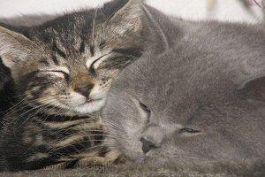 Alfie & Gizmo