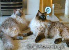 Roxy & Ollie
