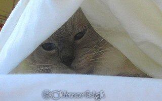 Mitzie hiding