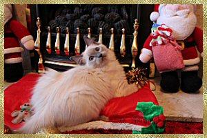 Christmas Raggie