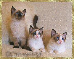 Mikka, Tilly & Frankie