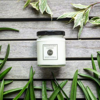 Wild Citrus Soy Candle