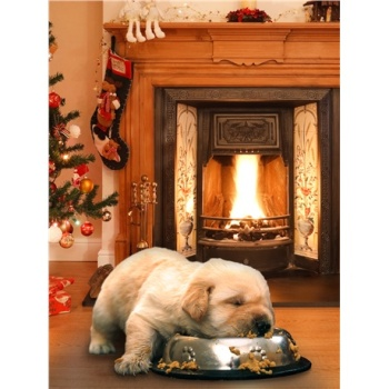 Christmas Dinner for 10 Guide Dog Puppies