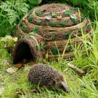 Hogilo + hedgehog food + snack bowl offer
