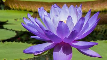 Give a Gift Membership to Kew Gardens