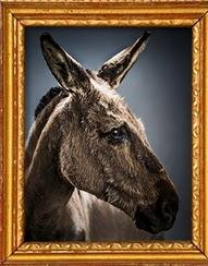 Adopt a donkey from the Donkey Sanctuary