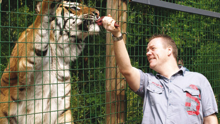 50% off Feeding Big Cats in Hertfordshire (Weekdays) - only £99 instead of £199