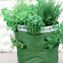 What about a herb garden?