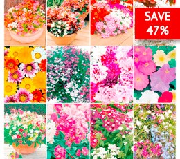 Save yourself 47% on this special offer from Suttons Seeds