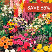 Summer Bulb Bumper Mix - save 65%