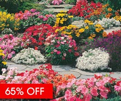 Complete Garden Bedding Plants - LUCKY DIP