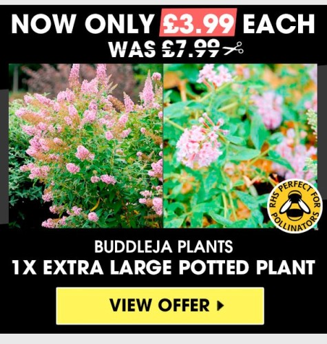 Visit Suttons Seeds' website to see their offers - many will help bees
