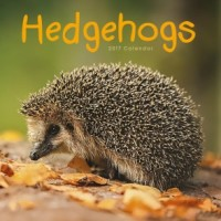 Hedgehogs Calendar 2017
