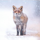 Christmas card offer - Buy 3 packs save £1.50 with the RSPB Online Shop