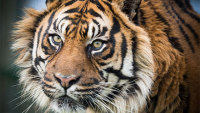 10% off experience with Big Cats in Kent