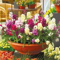 Fill your garden with bedding plants and colour