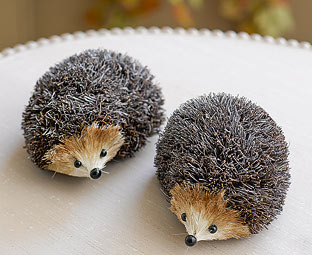 Two hedgehogs - so irresistable!