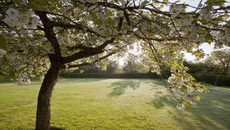 Enjoy the sight of the best spring gardens with the National Trust