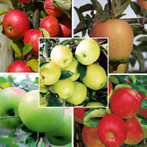 A mouth-watering offer from Suttons ..... save yourself 68% on their Apple Tree Collection