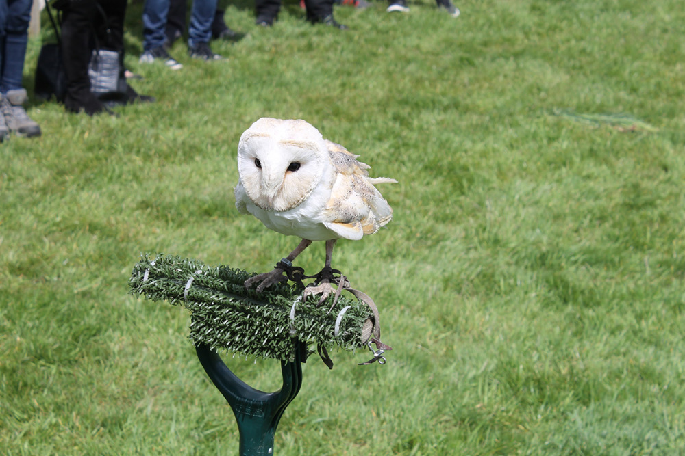 Falconry Taster for Two from Virgin Experience Days