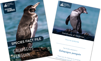 Galapagos Penguin Digital Adoption