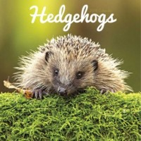 Hedgehogs Calendar 2018